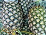 Sarawak Pineapple